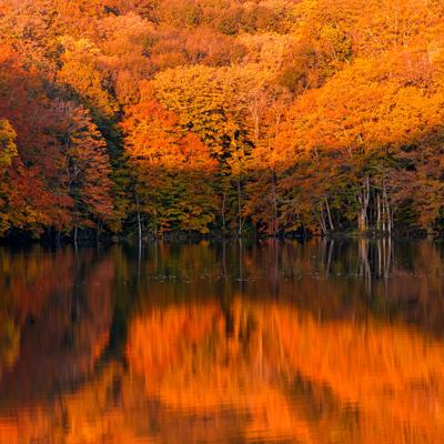 Autumn   Artgalley Season