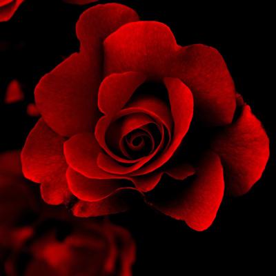 Gorgeous | Artgallery Image
