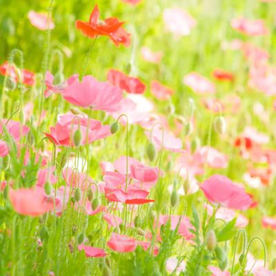 Spring | Artgalley Season
