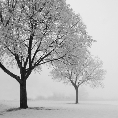 Winter | Artgalley Season